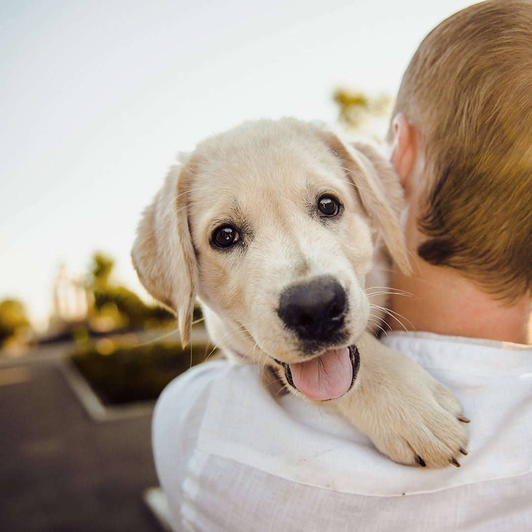 10 reasons why you should get a shelter dog
